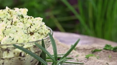 Herb Butter (not loopable) Stock Footage