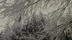 Bare tree covered with snow in winter, Ashland - stock footage