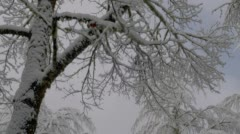 Bare tree covered with snow in winter, Ashland Stock Footage