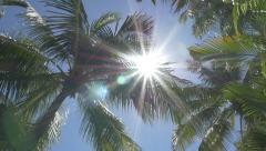 Slow motion palm trees with sun. - stock footage