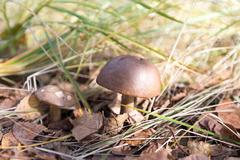 Stock Photo of Mushroom among grass and leaves