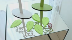 Top view of fallen artificial leaves on the glass table Stock Footage
