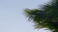 Palm tree in strong wind close up, 4K - stock footage