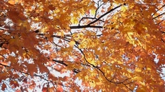 Fall Leaves During Windy Day Stock Footage