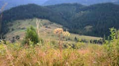 Video alpine scenery, morning in the mountains - stock footage