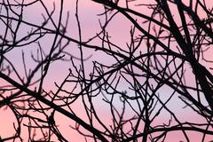 Stock Photo of bare branches of a tree at sunset