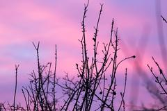 Bare branches of a tree at sunset Stock Photos