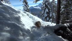 European Hare during wintertime 2 Stock Footage