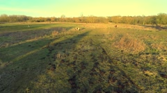 Aerial horse pasture shots. Flying over and viewing down at horses Stock Footage