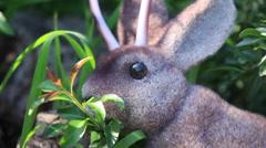 Wild Jackalope Nibbles Leaves, Flees Stock Footage