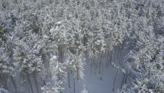 Aerial - Circling above snowy pine trees Stock Footage