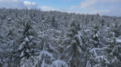 Aerial - Past the snowy tree tops above the forest Stock Footage