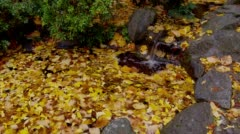 Little waterfall in pond with fall leaves, Ashland - stock footage