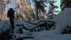 Snow abies pinsapo Stock Footage