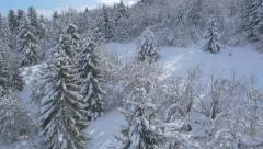 Aerial - Snow-covered tree area Stock Footage