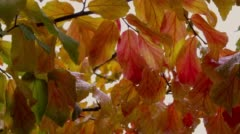 Close-up of leaves in Japanese garden Stock Footage