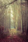 Country road in the forest on misty day Stock Photos
