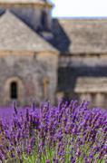 Monasteries of the Cistercian - stock photo