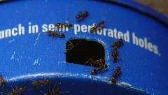 Ant Trap Macro Close up With Ants Stock Footage