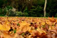 Autumn leaves and green trees together Stock Photos