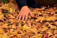 Human hand on autumn leaves Stock Photos