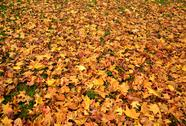 Yellow and red autumn leaves place covered Stock Photos