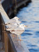 seagull sitting on the banisters on the waterfront - stock photo