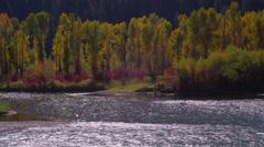 View of trees near Grand Teton National Park Stock Footage