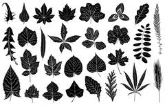 Illustration of different leaves Stock Illustration