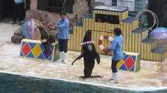 THAILAND, BANGKOK AUGUST 5, 2014. Seals show with participation of the people - stock footage