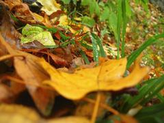 Yellow fallen leaf and green grass on the autumn forest ground Stock Photos