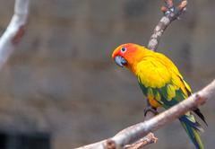 colorful parrot sitting - stock photo