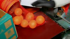 Packing oranges Stock Footage