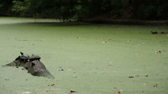 Prospect Park Turtle Falls In Stock Footage