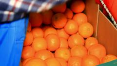 Selection of oranges - stock footage