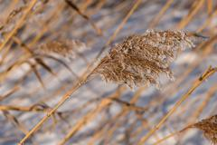 grass hoarfrost pattern background - stock photo
