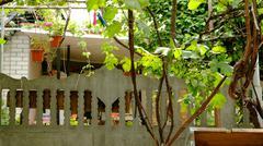 A grapevine near the house Stock Photos