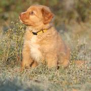 Beautiful puppy sitting in soft rime - stock photo