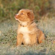 Beautiful puppy sitting in soft rime Stock Photos
