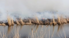 brush fire - stock footage