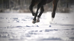 racehorse runs on snow,winter training,close up, slowmotion - stock footage
