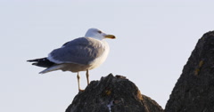 Malaga sunny day seagull close view 4k Stock Footage
