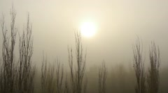 Fog, mist, haze, smoke, Halloween Stock Footage
