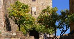 Sunny day mandarine tree in alcazaba castle 4k Stock Footage