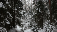 In the forest in winter Stock Footage