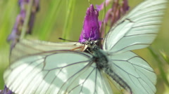Macro shot of a white butterfly flying around a pink flowers in spring valley Stock Footage