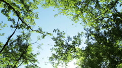 High angle of rotated camera view of trees in the forest Stock Footage