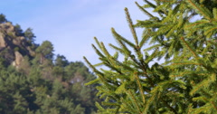 Mountain nature fir moving close up 4k from vall de nuria spain Stock Footage