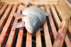 Gutted carp - stock photo