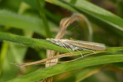 Moth in the grass Stock Photos